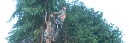 GreenWorx staff at work up a tree